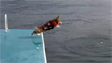 Dog Jumps into the water